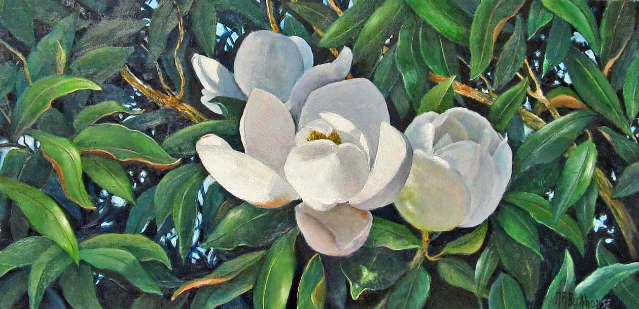 Magnolia Beauty