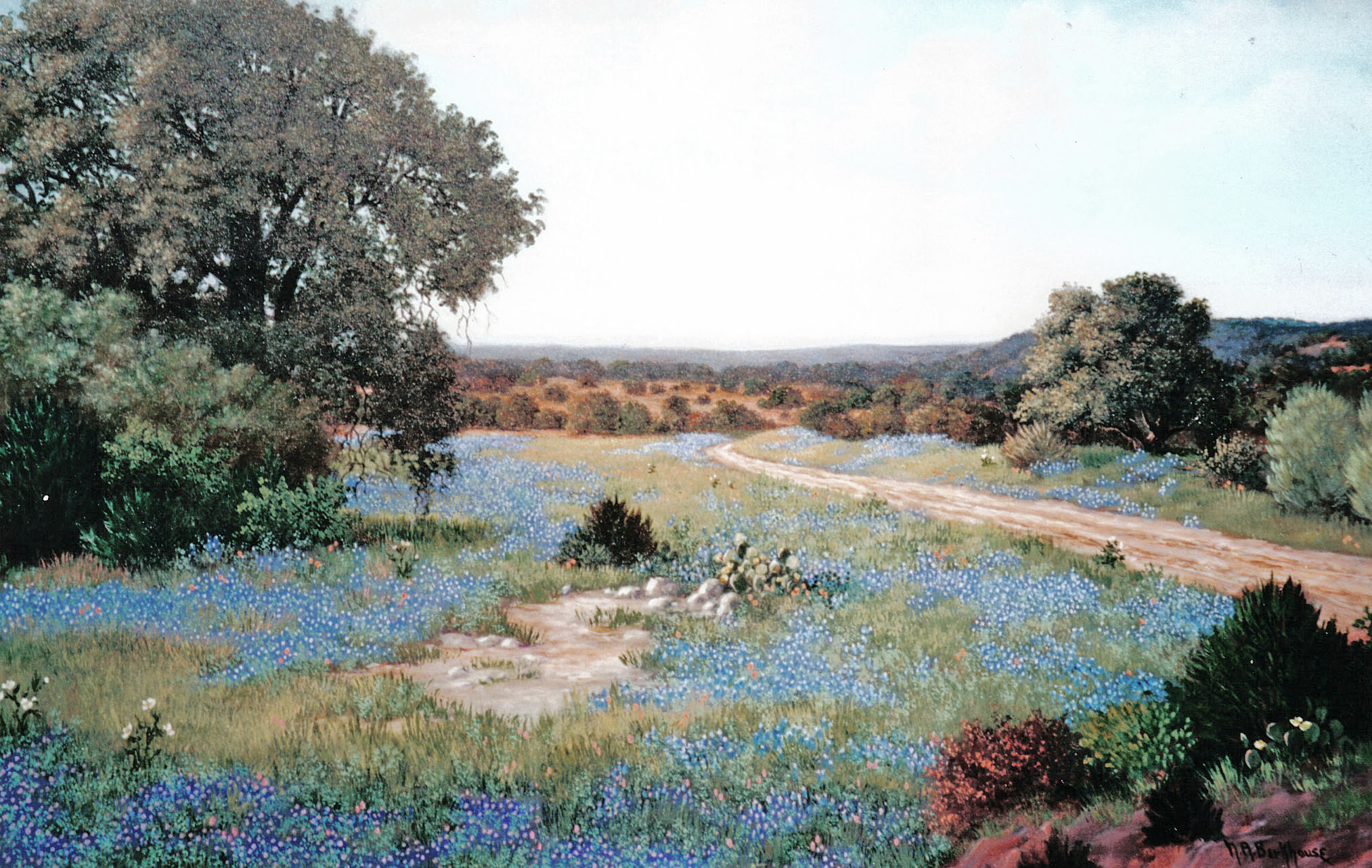 Bluebonnet Wonderland